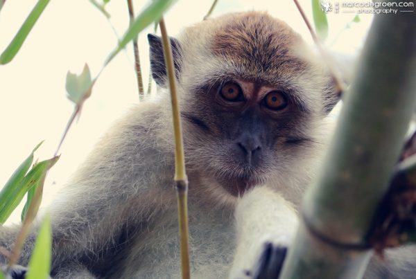 monkey1-2
